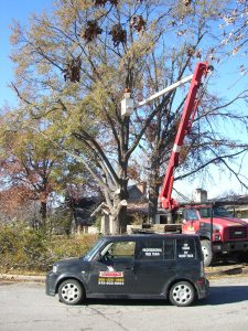 Tree company from North Carolina begins the tree removal.